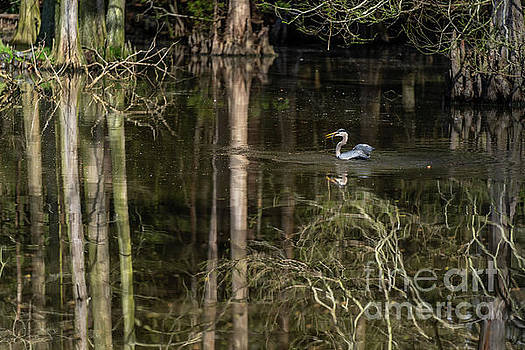 Wacatee Swamp Lunch by David Smith