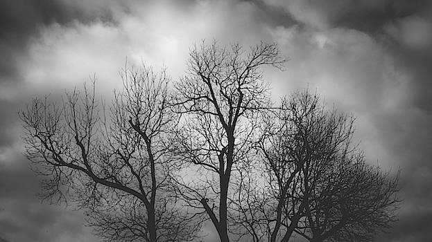 Waiting Bird by Dheeraj Mutha