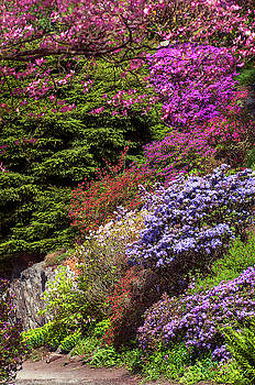Jenny Rainbow - Walk in Spring Eden. Alpine Blooms
