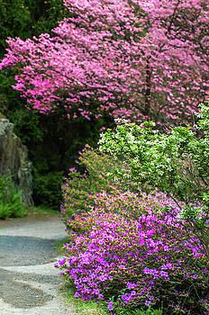 Jenny Rainbow - Walk in Spring Eden. Dogwood and Azaleas