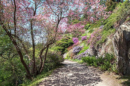 Jenny Rainbow - Walk in Spring Eden. Dogwood Tree Blossom