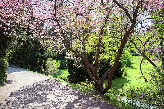Jenny Rainbow - Walk in Spring Eden. Lacy Blooms 1