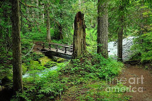 Walkbridge across Stevens Creek by Jeff Swan