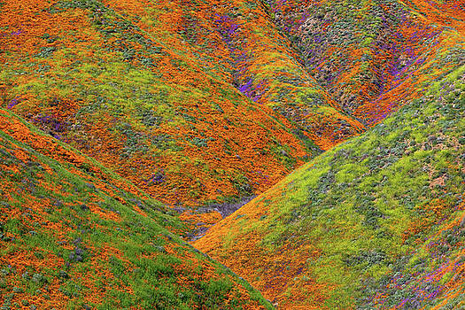 Walker Canyon Super Bloom by Brian Knott Photography