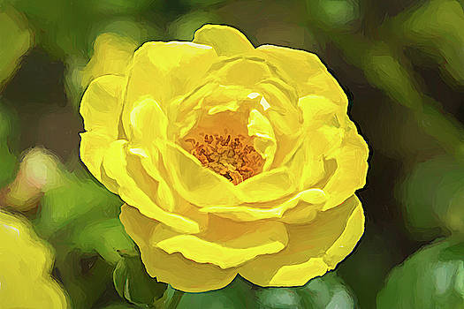 Walking On Sunshine Rose by Debra Martz