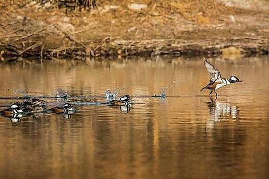 Walking On Water by John Bartelt