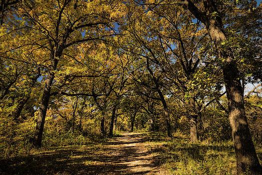 Walking Through Fall by Scott Bean