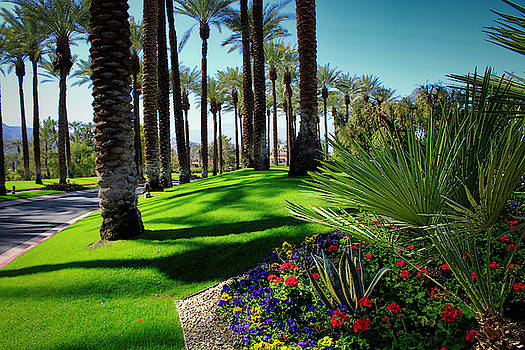 Walking through Palm Springs by Todd Dunham
