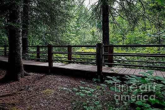 Walking Trail along Gooseberry River by Susan Rydberg