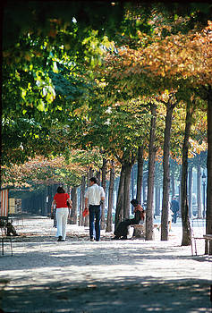 Walking under Fall Trees in Paris by Carl Purcell