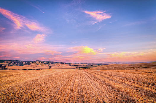 Walla Walla Wheat by Spencer McDonald