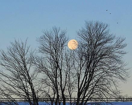 blood moon 2019 vermont - photo #24