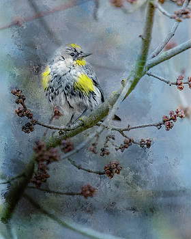 Warbler 1 by Rebecca Cozart