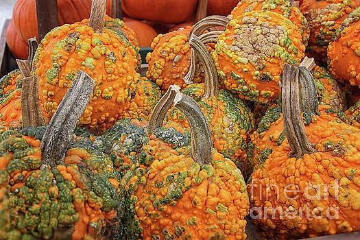 Warty Pumpkins by Karen Adams
