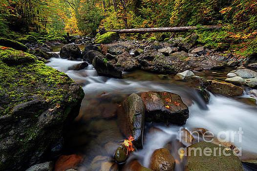 Washington Cascade Autumn by Mike Dawson