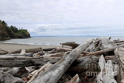 Washington Coastline with Driftwood by Carol Groenen