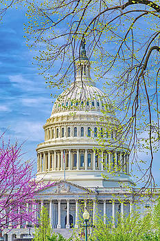 Washington DC Capitol Springtime by Betsy Knapp