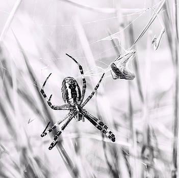 Wasp Spider In Action by Jaroslav Buna