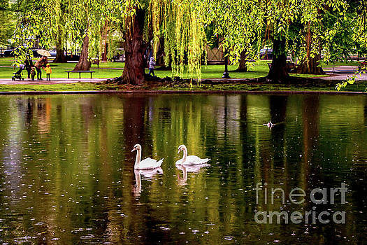 Watching the Swans by Elizabeth Dow