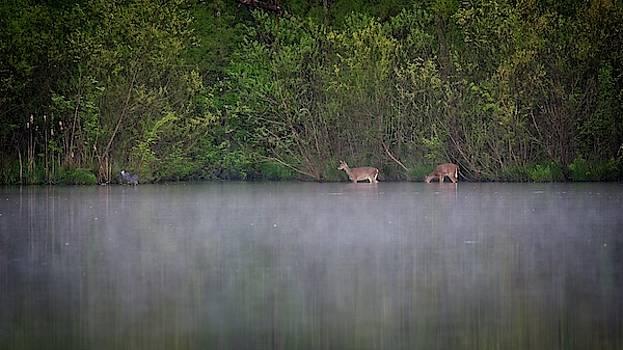Water Grazing Deer by John Benedict