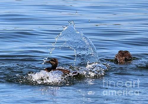 Sandra Huston - Water In Motion