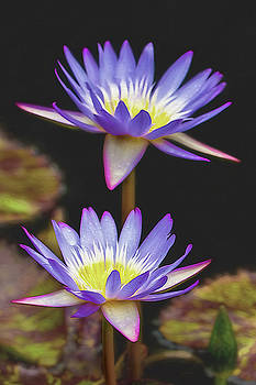 Water Lily Flower  by Reynaldo Williams