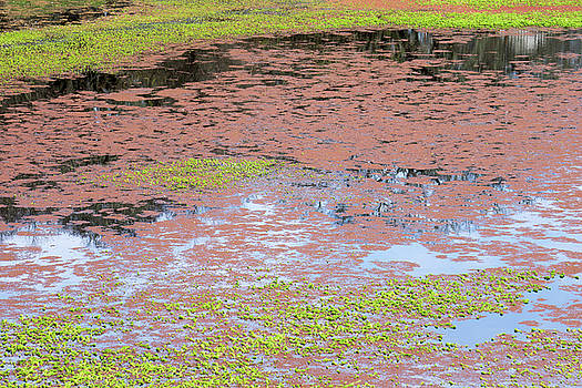 Water Reflection svrp_1108_18 by Tari Kerss