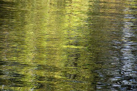 Water Reflection_521_17 by Tari Kerss