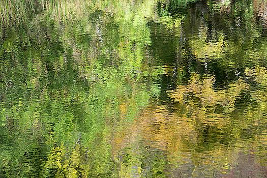 Water Reflection_598_17 by Tari Kerss