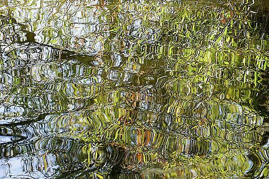Water Reflection_65_17 by Tari Kerss