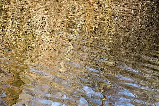 Water Reflection_751_18 by Tari Kerss