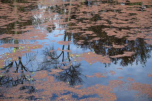 Water Reflection_svrp_1056_18 by Tari Kerss