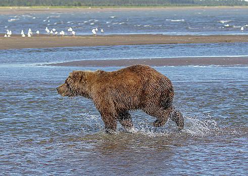 Water Running by Leigh Lofgren