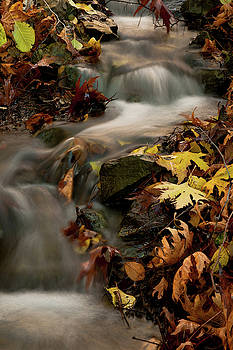 Water stream in the forest during autumn by Michalakis Ppalis