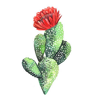 Watercolor Cactus. Original Watercolor by Yudina Anna