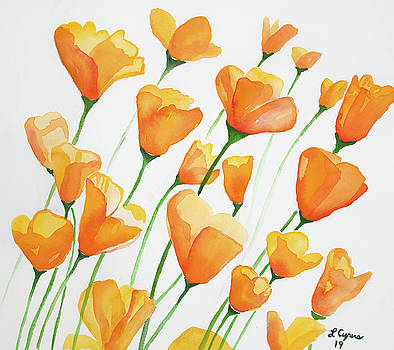 Watercolor  - California Poppies by Cascade Colors