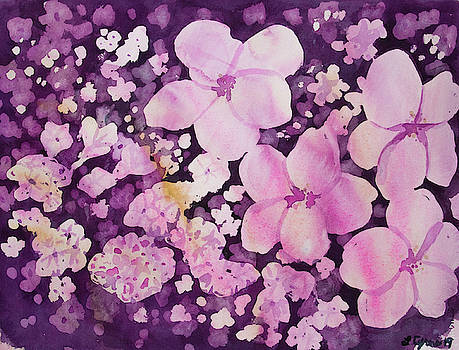 Watercolor - Cherry Blossom Design by Cascade Colors