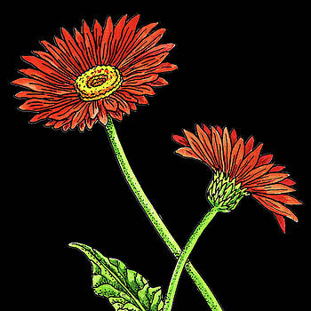 Watercolor Flower Red Gerbera by Irina Sztukowski