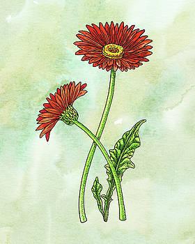 Watercolor Gerbera Daisy Botanical by Irina Sztukowski