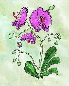 Watercolor Of Pink Moth Orchid Botanical  by Irina Sztukowski