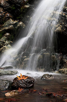 Waterfall and leaves in water, Troodos Cyprus by Michalakis Ppalis