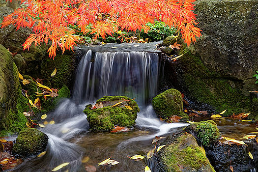 Waterfall at the garden by Peter Ponzio