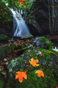 Waterfall in autumn forest by Valentin Valkov