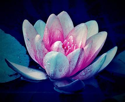 Waterlily Abstract by Mandy Byrd