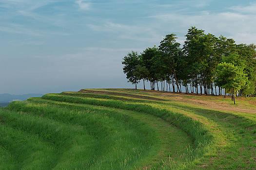 Waves of grass by Davor Zerjav