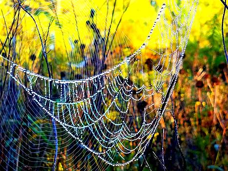 Web Cradle by Vijay Sharon Govender