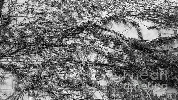 Web of Vines by Jeni Gray