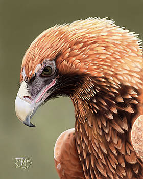 Wedge-Tailed Eagle by Robert Bovasso