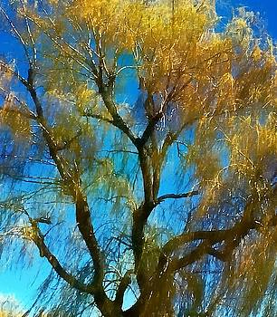 Weeping Willow in Spring by Lenore Senior