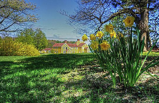 Wayne Marshall Chase - Wentworth Daffodils